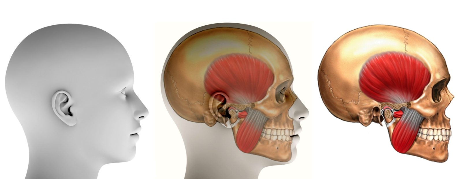 Челюстно — лицевая хирургия